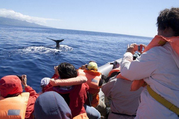 Faial - Whale watching, ©nebulux76/Flickr