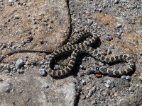 Visiting and experiencing wildlife at the Algarve – snakes and bird watching